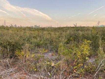 Endangered landscape