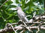 Little boy bluebird