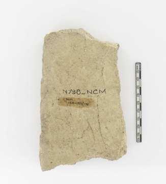 NCM 1890-1355-738 [reverse]