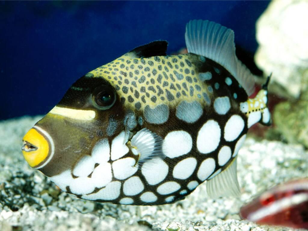 виды необычных рыб фото и названия большей выразительности картинки