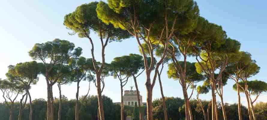 LAZIO REGION FUNDS RACE TO SAVE ROME'S PINES FROM DEADLY PARASITE