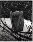 | Calcified Bat, Lake Natron, 2010 |