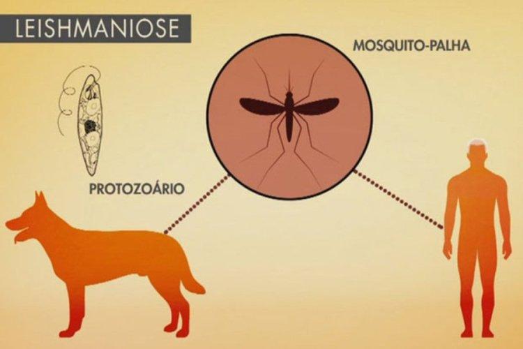 Paulista é um dos principais focos dos casos de leishmaniose em Pernambuco