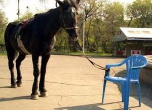 interesting-reads-horse-tied-to-chair