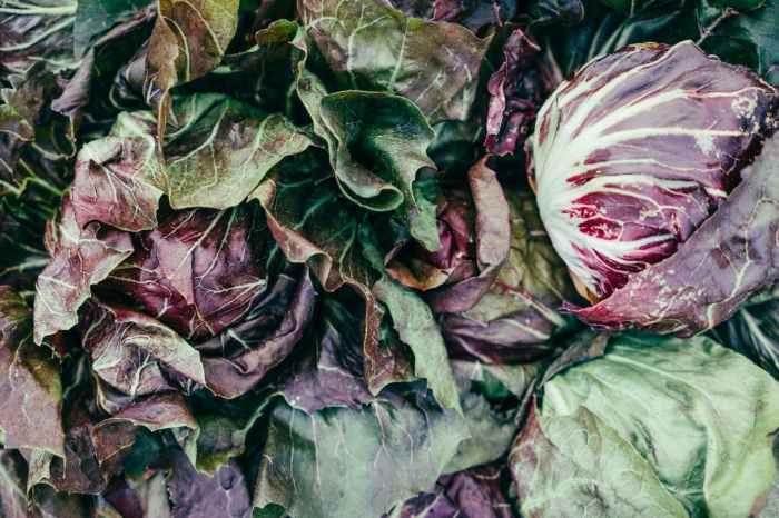 multicolored lettuce heads lot