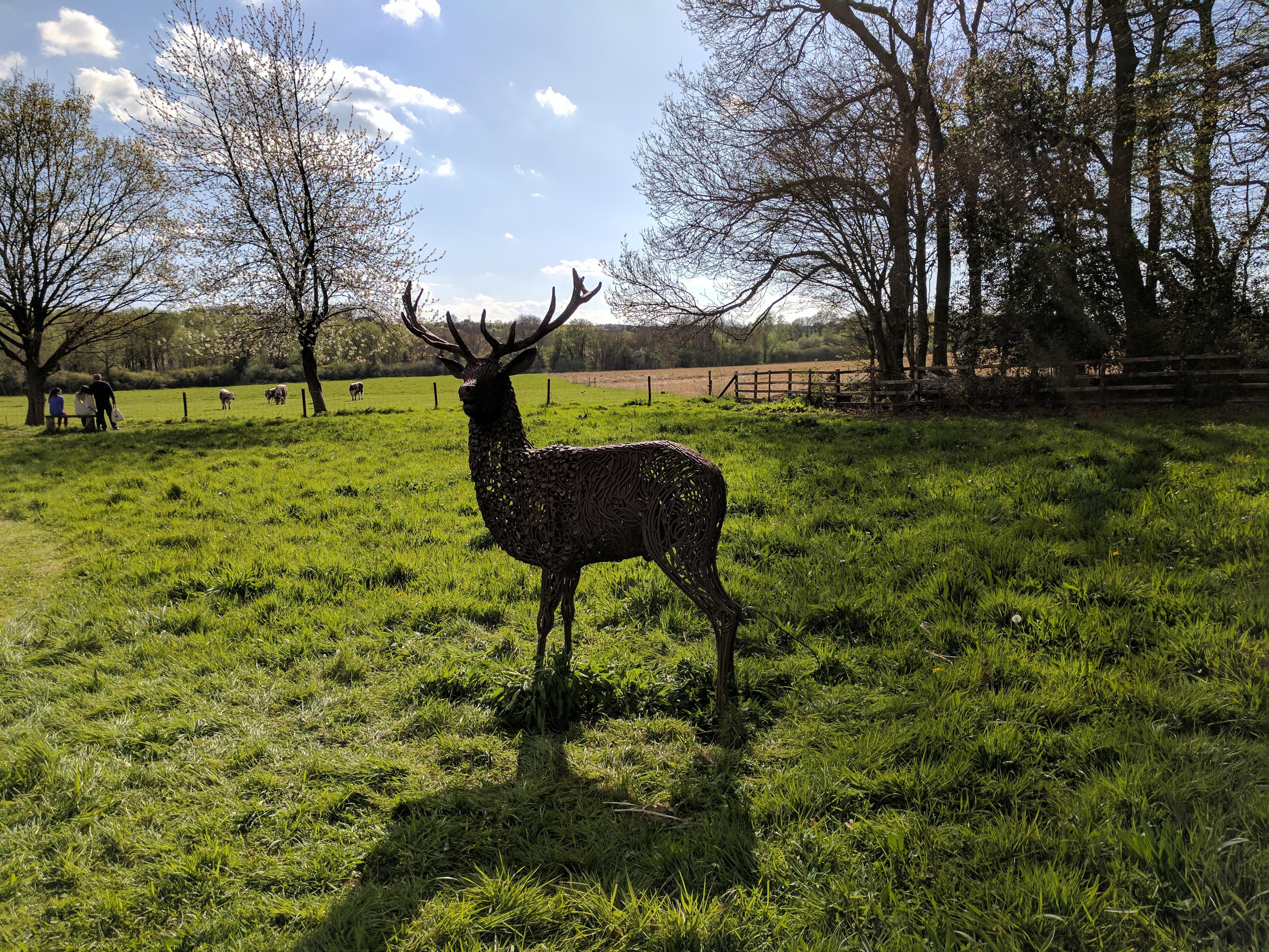 Coton stag – Photo © Hilary Scott