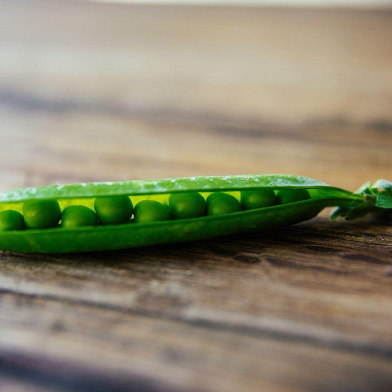 August Harvest: Sugar Snap Peas