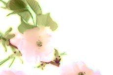 flower202