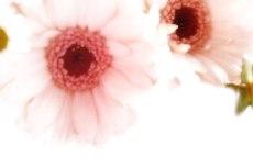 flower206