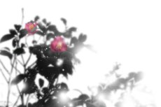 flower277
