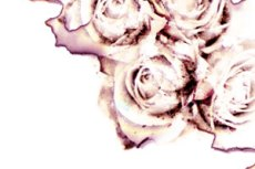 norepeat-flower051_2