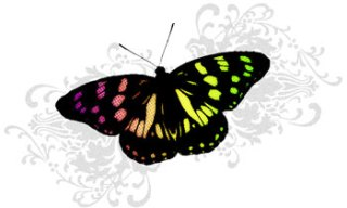 鮮やかな蝶とボタニカル柄(8パターン)