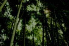竹林の写真素材