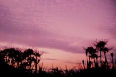 彼岸花の咲く野辺の夕べ