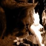 猫の横顔の写真素材