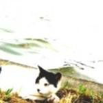 水辺の猫の写真素材