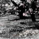 桜とベンチの写真素材