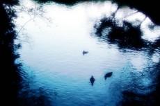 鳥のいる湖の写真素材