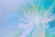 cover_flower004-2