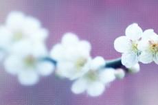 cover_flower005-2