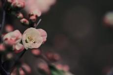 flower373-2