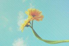 flower374
