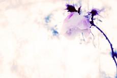 flower377-2