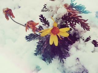 【高解像度】雪に埋もれる花(2パターン)