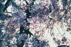 flower384-2
