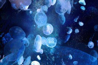 【高解像度】宇宙を漂うような海月(クラゲ)(3パターン)