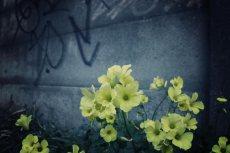 flower393-2