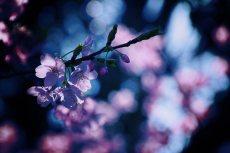 flower405