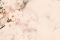 flower418-2