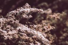 flower421-2