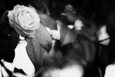 flower431-3