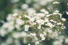 flower437