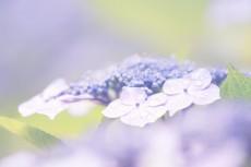 flower444-2