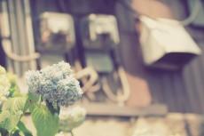flower462-2