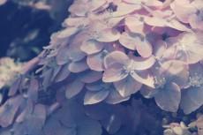 flower463