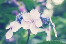 flower468