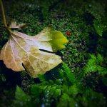 【高解像度】苔の上の落ち葉と赤い実
