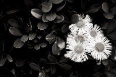 flower484
