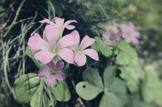 flower504