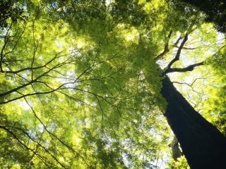 【高解像度】大樹と豊かな緑