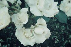 flower513
