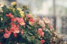 flower519