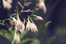 flower527-2