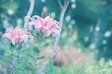 flower551