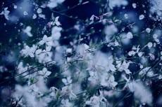 flower552
