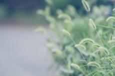 flower561